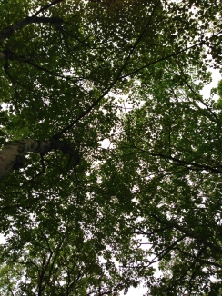 Raccoon's eye view of our campsite.