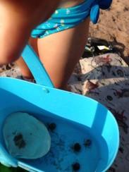 Hermit crab acquarium