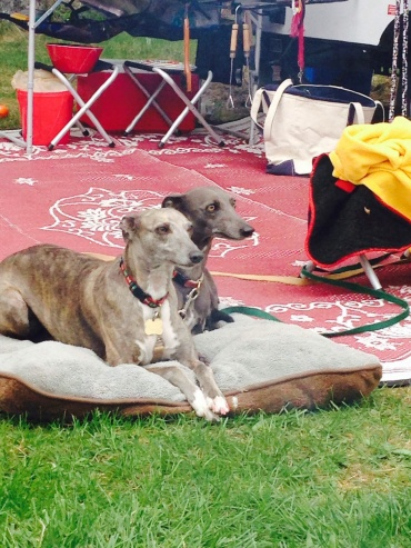 Rugs, blankie's and doggie beds