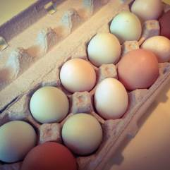 Eggs_IMG_7766
